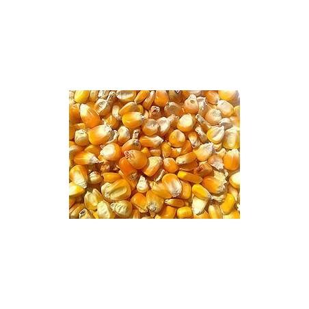 Maiz-americano-cereales-palomos-gallinas