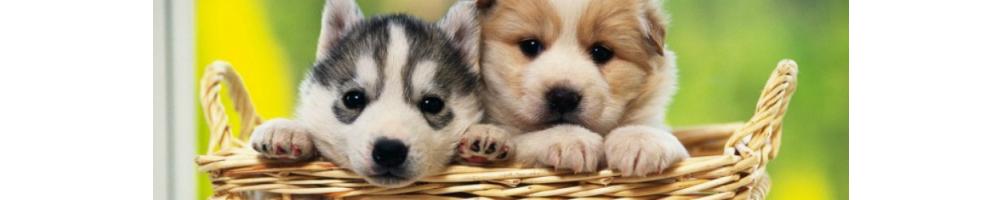 Pienso Cachorros | MaxMascota.com
